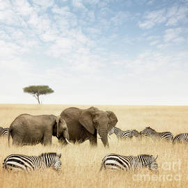Elephants and zebras in the Masai Mara - Jane Rix