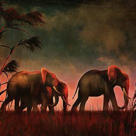 Elephants walking together by Jan Keteleer
