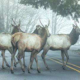 Kristina Rinell - Elk Crossing 0749