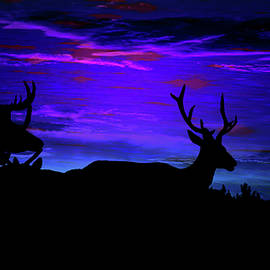 Elk Silhouette Evening Dreamscape by Mike Breau