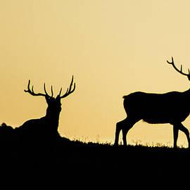 Jennifer Myers - Elk silhouette