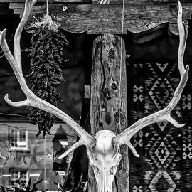 Elk Skull In Black And White - Garry Gay
