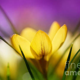 LHJB Photography - Embracing the light..