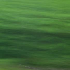 Michael Hills - Emerald Forest