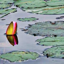 Steven Ralser - Emerging Water Lily