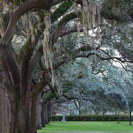 Emmet Park In Savannah by Carol Groenen