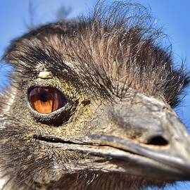 Emu Eye I by Linda Brody