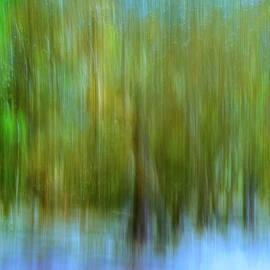 Carol Eade - Enchanted Cypress Forest