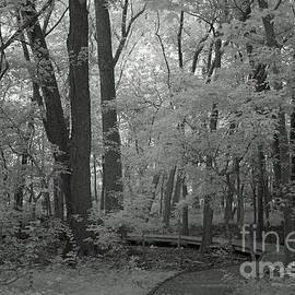 Enchanted Forest Black and White  by Steve Gass