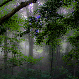 Donna Fonseca Newton - Enchanted Forest