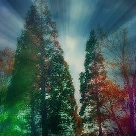 Bobbee Rickard - Energy Radiates Inspirational