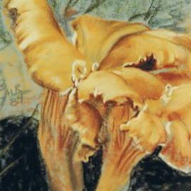 Entoloma Incanum by Barbara Keith