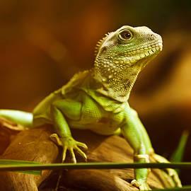fbmovercrafts - Epic Iguana