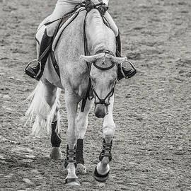 Equestrian Graceful Gray - Betsy Knapp