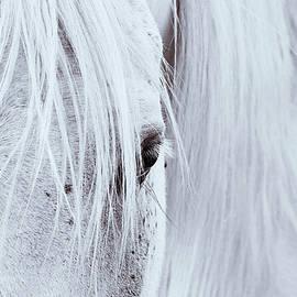 AGeekonaBike Photography - Equine Eye