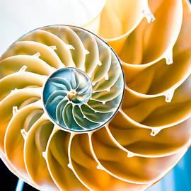 Colleen Kammerer - Eternal Golden Spiral