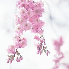 Jenny Rainbow - Ethereal Spring