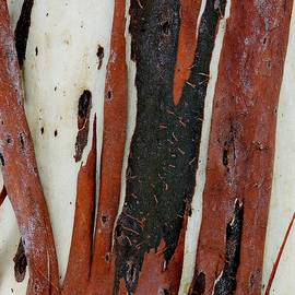 Denise Clark - Eucalyptus Bark Abstract 2