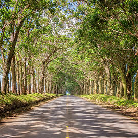 Brian Harig - Eucalyptus Tree Tunnel - Kauai Hawaii