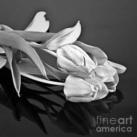 Sherry Hallemeier - Even Tulips are Beautiful in Black and White