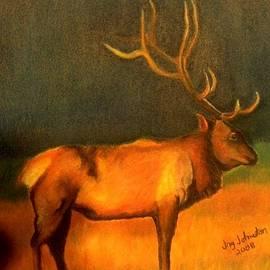 Jay Johnston - Evening Elk