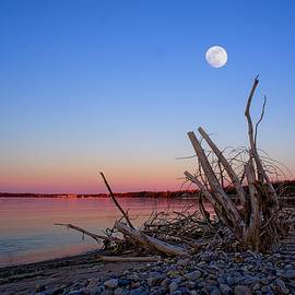 Evening Moonrise by LuAnn Griffin