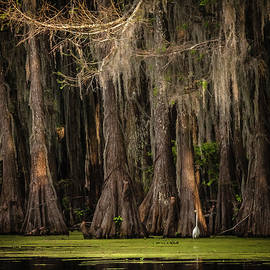 Evening on Caddo Lake by Carl Chick