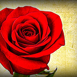 Evening Rose by Judy Vincent