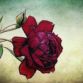 Alice Gipson - Evening Rose Perfection