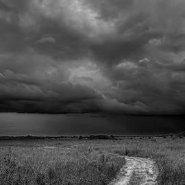 Rudy Umans - Everglades 2425