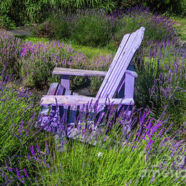 Evergreen Lavender Farm by Norma Brandsberg