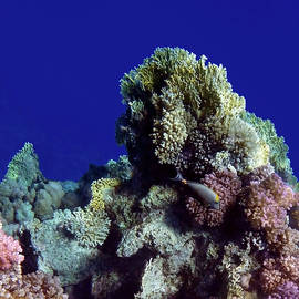 Exciting Red Sea Sealife