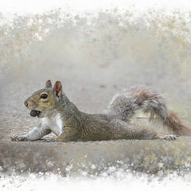 Jai Johnson - Exhausted Squirrel