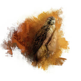 Expressions Red Tail Hawk by Jai Johnson
