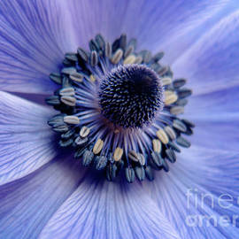 Ricardos Creations - Expressive Blue and Purple Floral Macro Photo 706