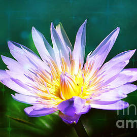 Exquisite Waterlily by Trudee Hunter
