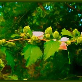 Debra Lynch - Extending The Flower Branch