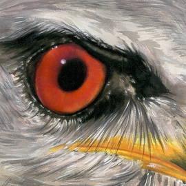 Barbara Keith - Eye-catching Black-shouldered Kite