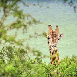 Cindi Alvarado - Eye in the Sky- Giraffe
