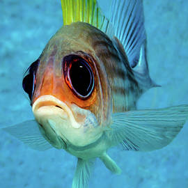Eye Of A Squirrelfish by Chip Evra