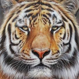 Elena Kolotusha - Faces of the Wild - Amur Tiger