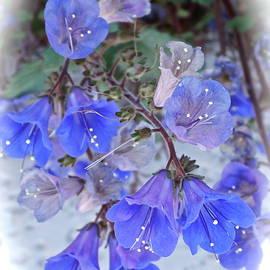 Tender Blues by Bonnie See