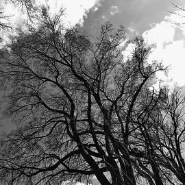 Julian Grant - Fair Trees #1