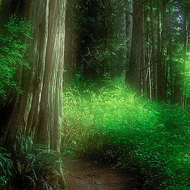 Fairy Forest by Kim Lessel