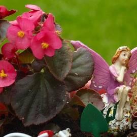 Christopher Johnson - Fairy Garden