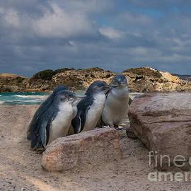 Fairy Penguins by Elaine Teague