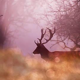 Fairytale Fallow Deer  by Roeselien Raimond