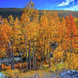 Lynn Bauer - Fall Above McGee Creek