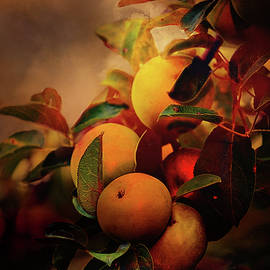 Theresa Campbell - Fall Apples A Living Still Life