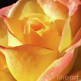 Cindy Treger - Fall Beauty - Rose